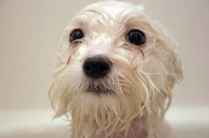 We offer several different grooming services. Our grooming services include a Mini Groom, Full Groom, and De-matting.
