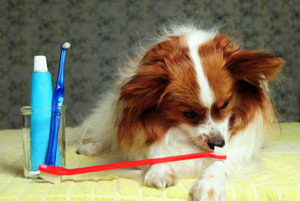 We offer a teeth scrapping and brushing technique which removes built up plaque to maintain the health of your dog's teeth.